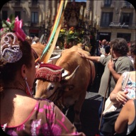 There were decorated Oxen, pulling a huge cart that had an altar of some sort, with towers modeled after those on Gaudi's Sagrada Familia - which I'll post more about soon.